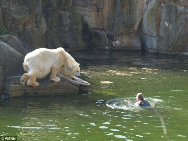Louca de pedra, 3 ursos: um espetáculo bizarro no zôo