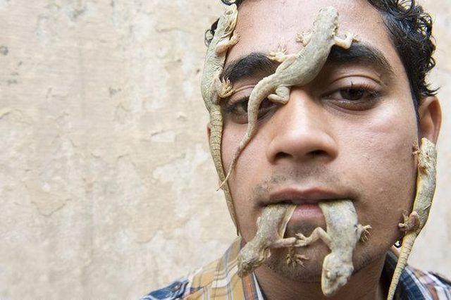 Senhor dos lagartos