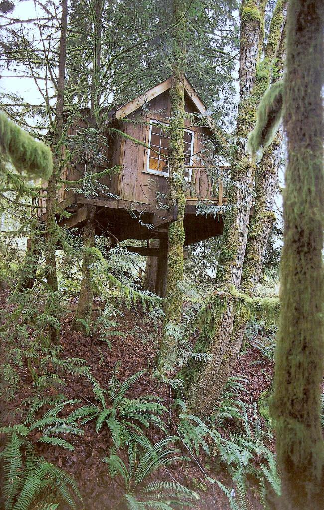 Casa na árvore 11