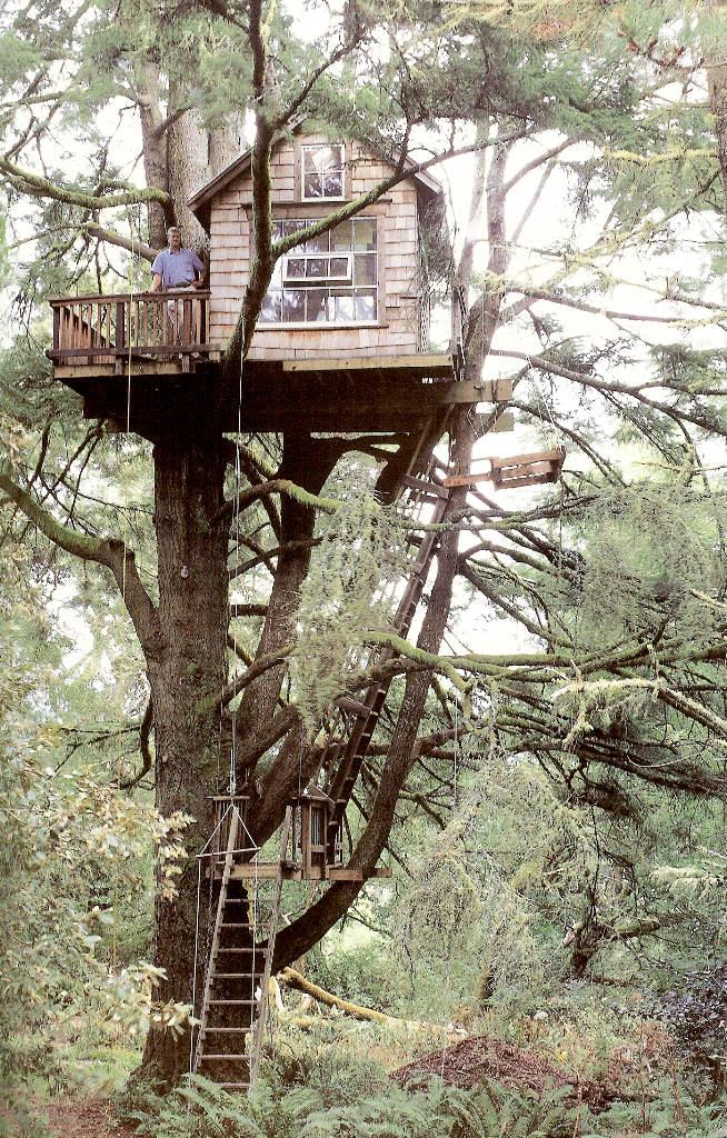 Casa na �rvore 15