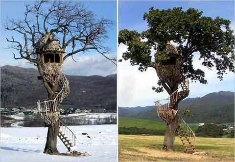 Casa na árvore 26