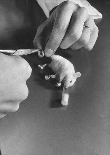 Experiências de Dietrich Beischer