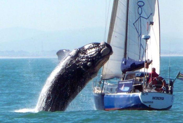 Barco avariado por ataque de baleia