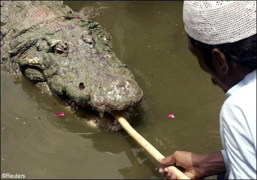 Festival do crocodilo no Paquistão