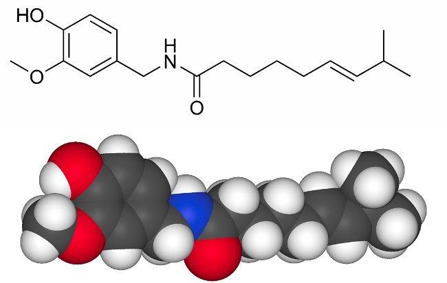 Capsaicina, a molécula picante