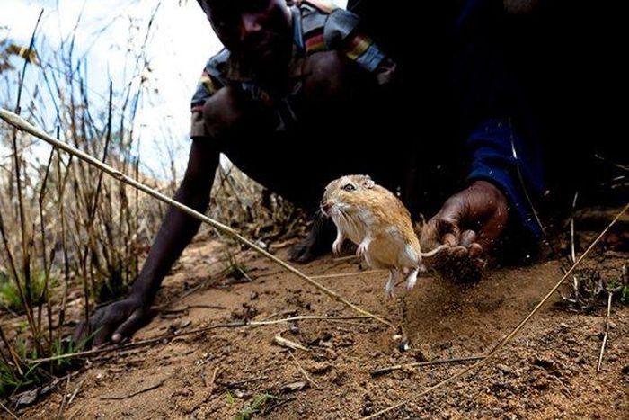 Os caçadores de ratos de moçambique 01