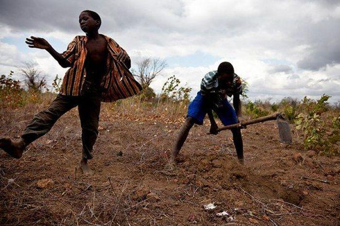 Os caçadores de ratos de moçambique 02