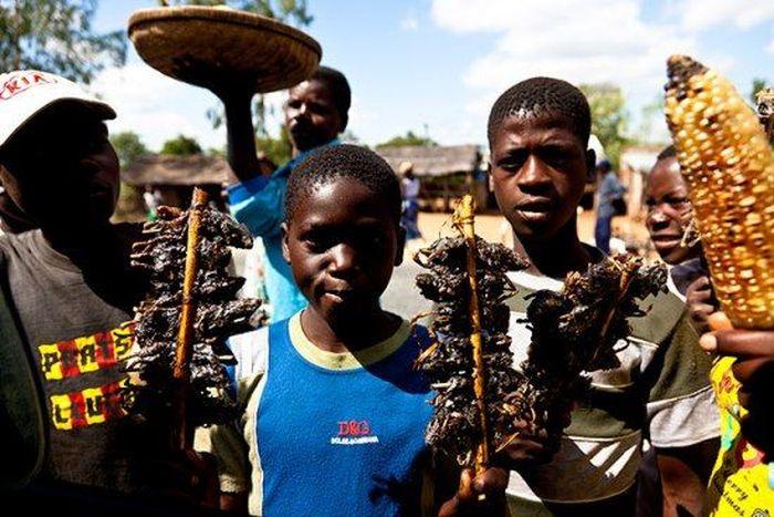 Os caçadores de ratos de moçambique 07