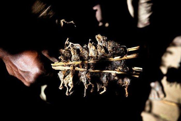 Os caçadores de ratos de moçambique 14