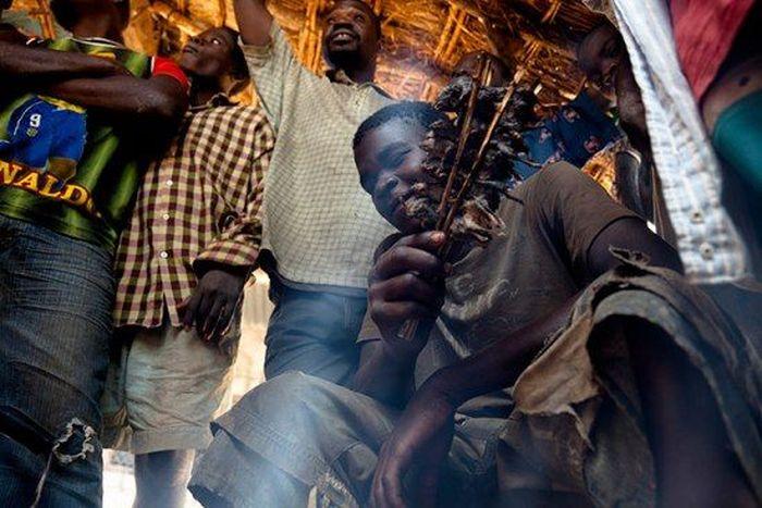 Os caçadores de ratos de moçambique 15