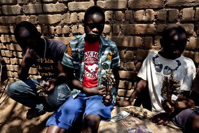 Os caçadores de ratos de moçambique 17