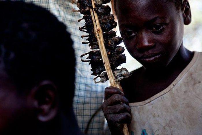 Os caçadores de ratos de moçambique 22