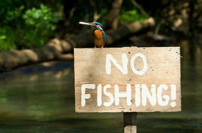Martim pescador