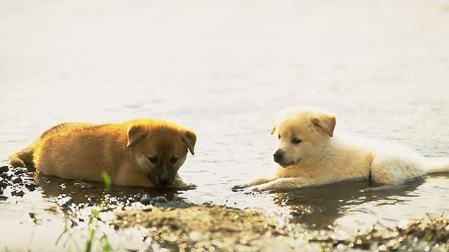 Sobre cães e pessoas
