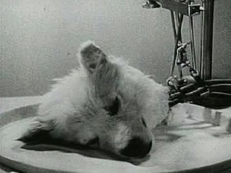 O experimento Brukhonenko