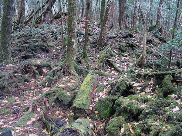 Aokigahara: o bosque dos mortos