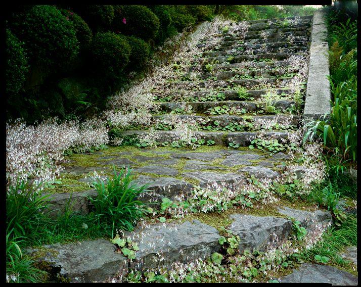 Jardim 06