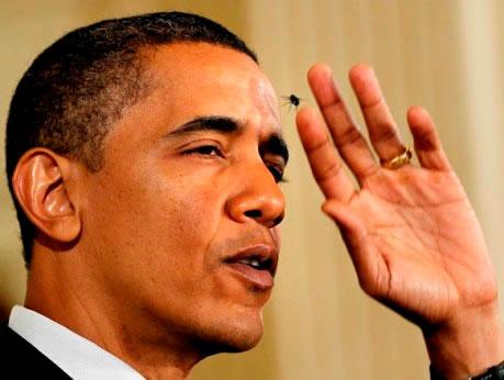 Obama e a mosca