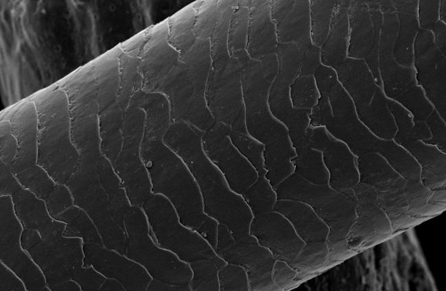Cabelo humano no microcópio eletrônico