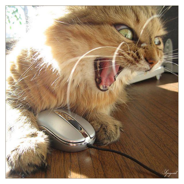 O rato é meu!