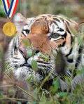 Animais campeões olímpicos