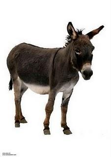 burro-2907.jpg